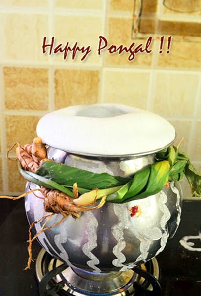 Happy-Pongal-Celebration-Wallpapers-03