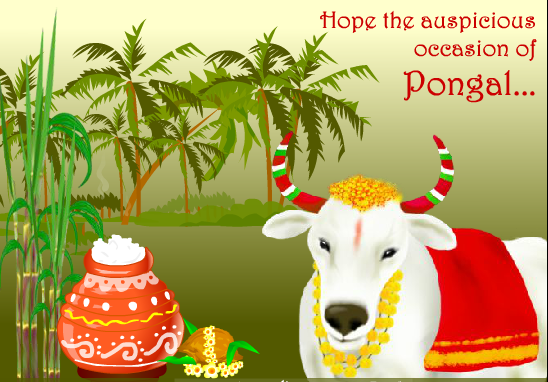 Happy Pongal Festival Greetings wallpapers-2016