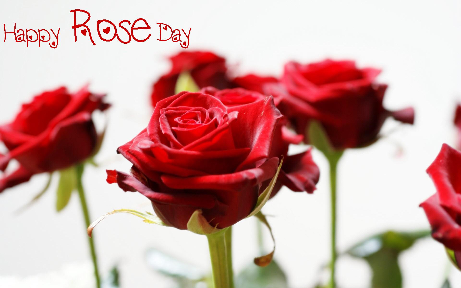 Happy-Rose-Day 2016