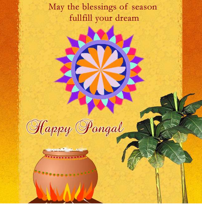 Pongal Festival hd pics images wallpapers