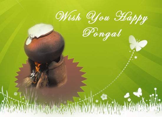 Pongal-best-images-2016