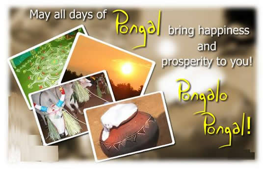 Pongal SMS, Messages, Wishes, Status in Tamil, English and Hindi