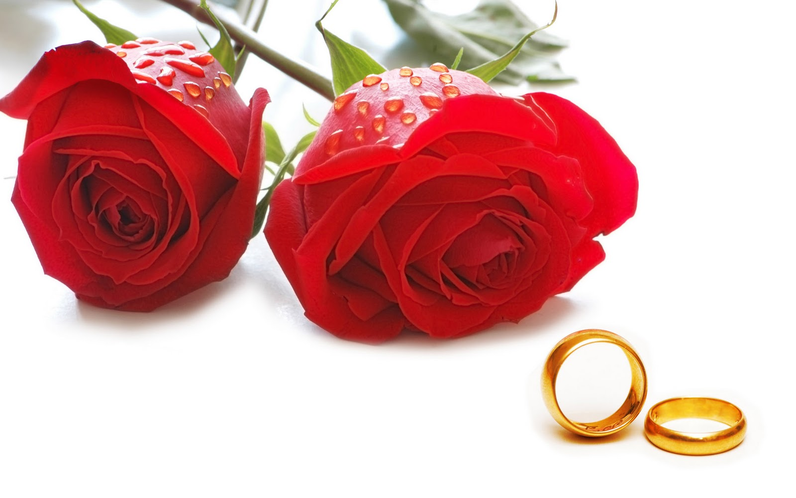happy-rose-day-with-ring-hd-wallpaper
