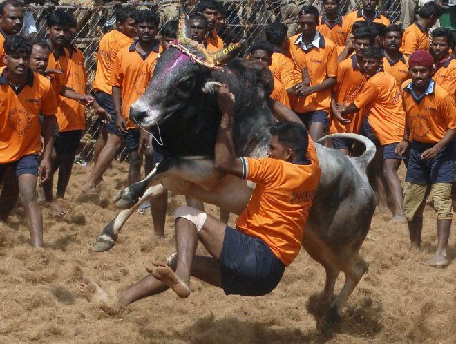 madu-pongall_THIRD DAY_pongal-celebration