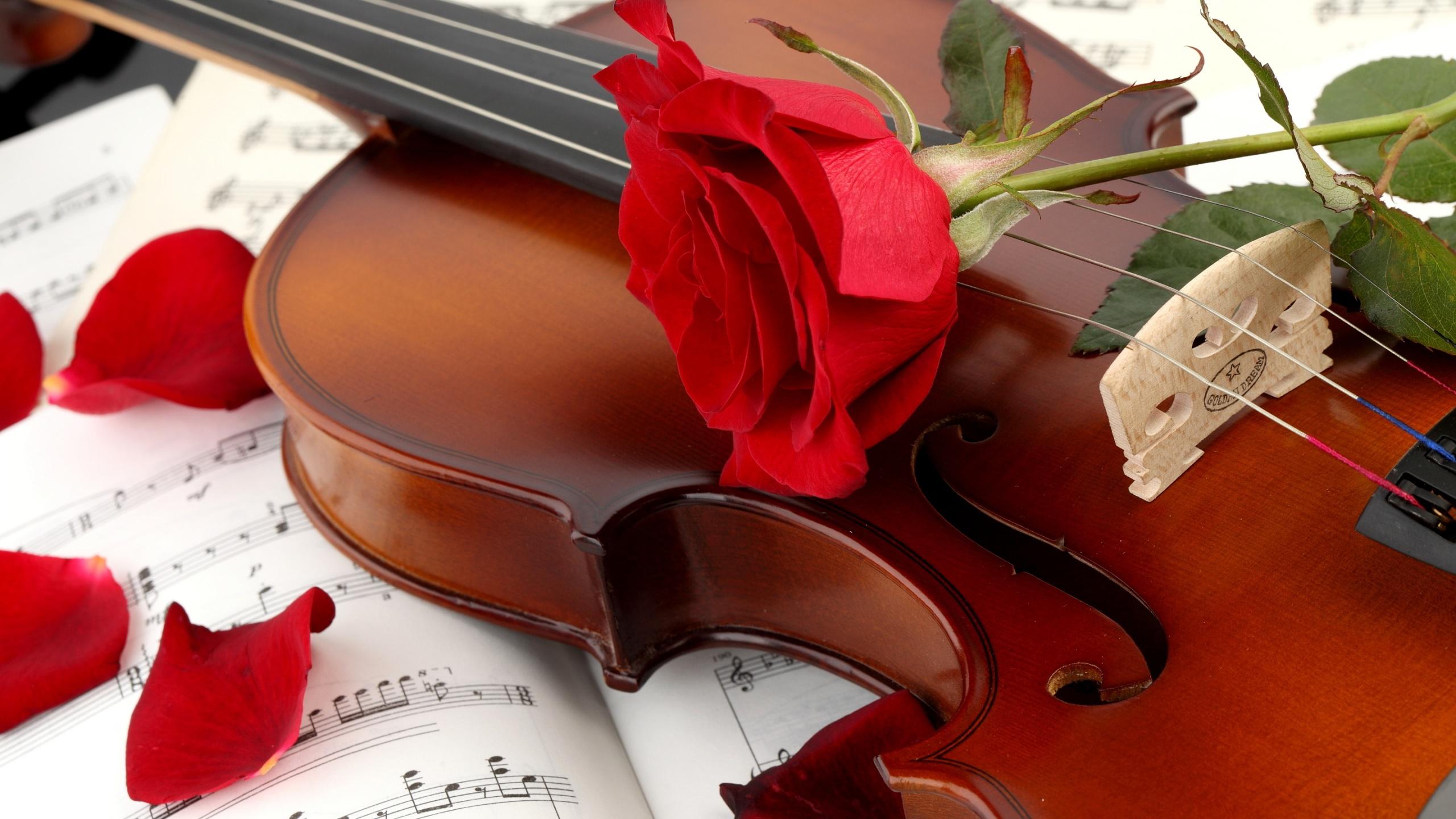 Lovely Red Rose HD Wallpaper