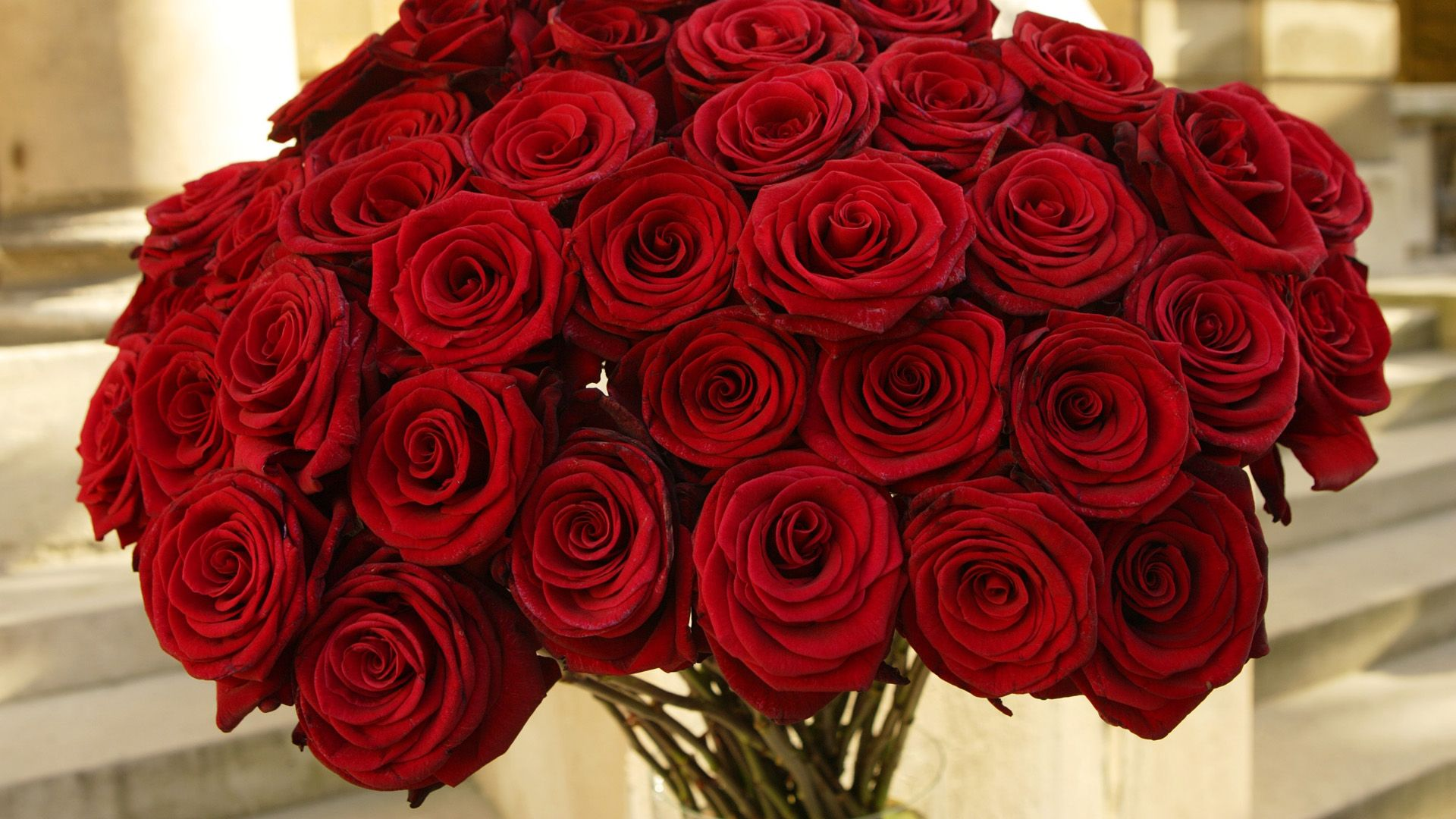 valentine�s day romantic red roses hd wallpapers free