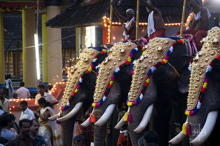 India-Onam-elephants-in-line-onam-celebration-2015-Importance, Significance, wallpapers