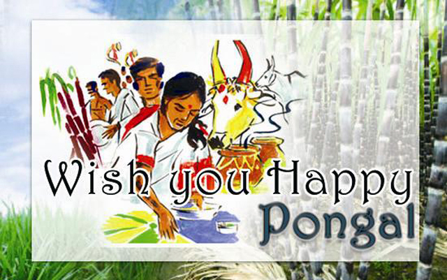 Happy-Pongal-Celebration-Wallpapers-04