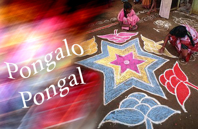 Happy-Pongal-Celebration-Wallpapers-2016