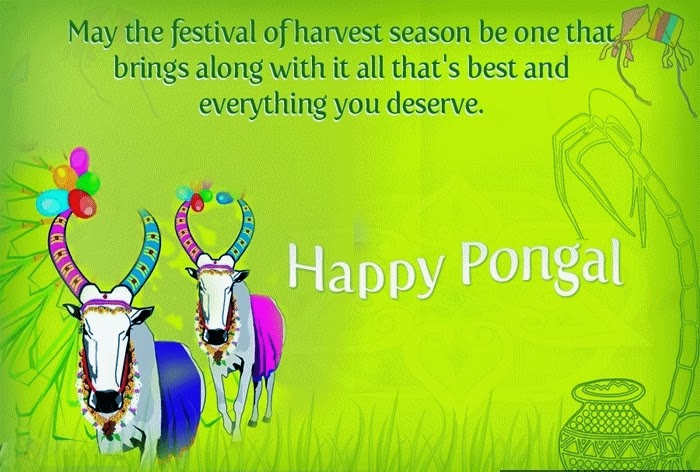 Happy Pongal wishes hd wallpapers photos (4)