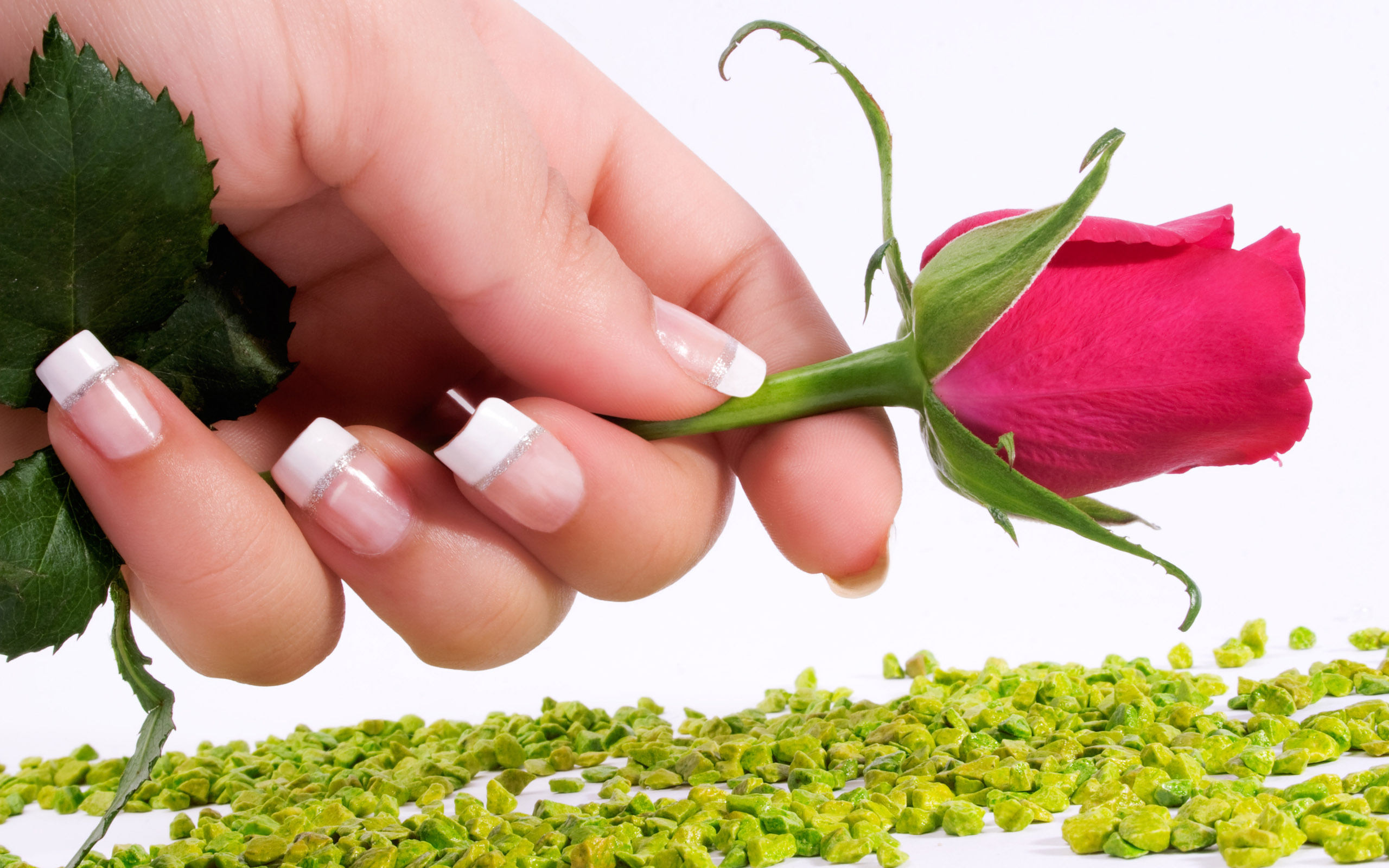 Happy Rose Day Gifts Hd Wallpapers For Rose Day
