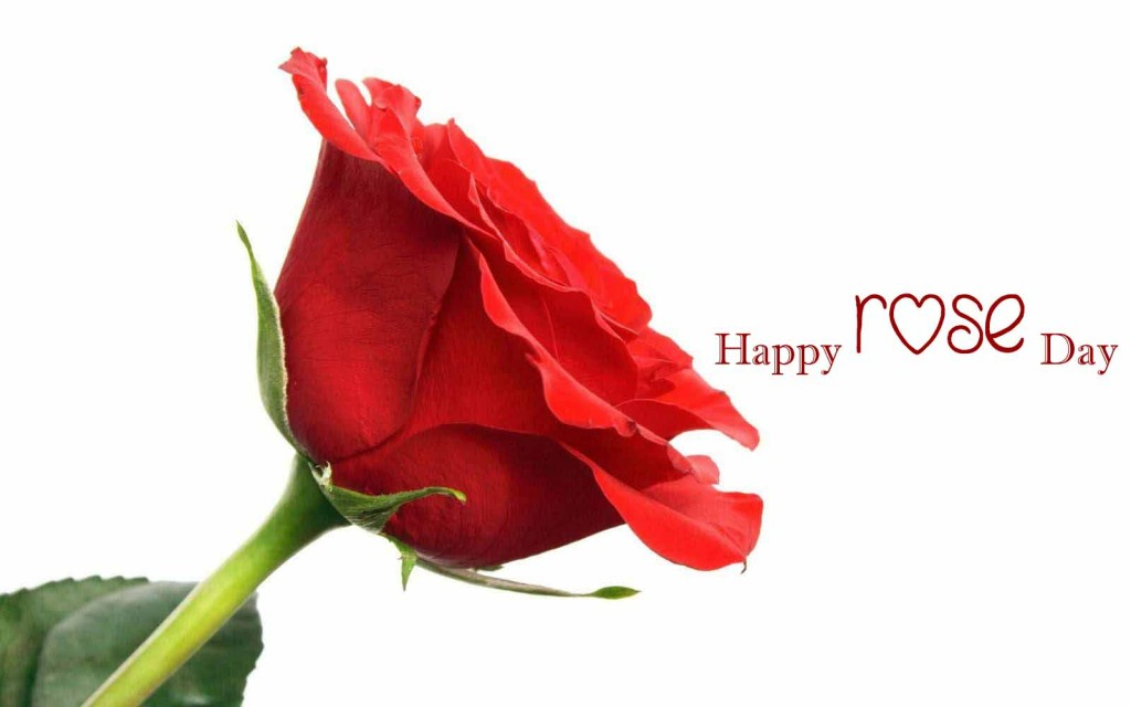 Red-rose-day-2016-wallpapers