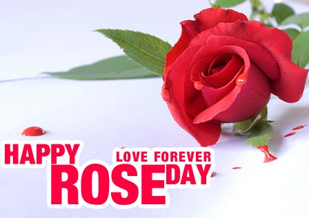 Happy-Rose-day-Images-Wallpapers-Pictures-2016