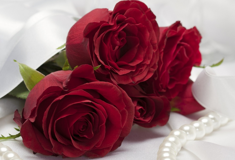 rose-day-messages-and-wishes-free