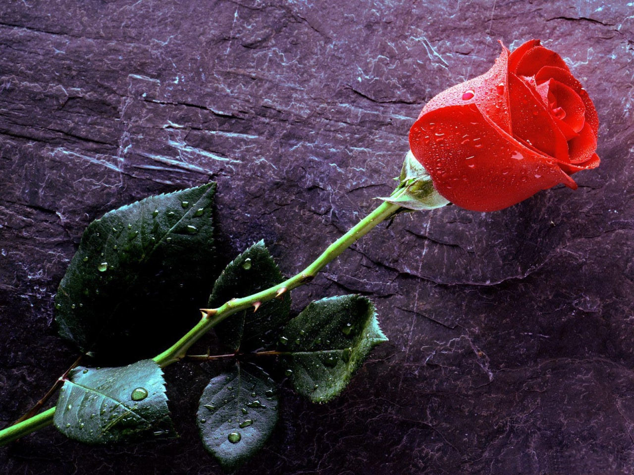 wao-amazing-look-red-roses-wallpapers-free-hd