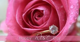 Rose Day Images for Whatsapp DP, Profile Wallpapers – Free Download 4